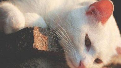 Photo of Viral, Polisi Buru Pria Makan Kucing Hidup-hidup di Pasar Kemayoran