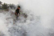 Photo of 76 Persen Karhutla di Indonesia Berada pada Lahan Terlantar