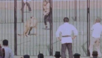 Photo of Ternyata Pernah Ada Duel Gladiator Manusia Lawan Singa di Stadion GBK