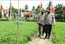 Photo of Hari Tani Nasional, Kabaharkam Polri: Jadikan Momentum Ketahanan Pangan